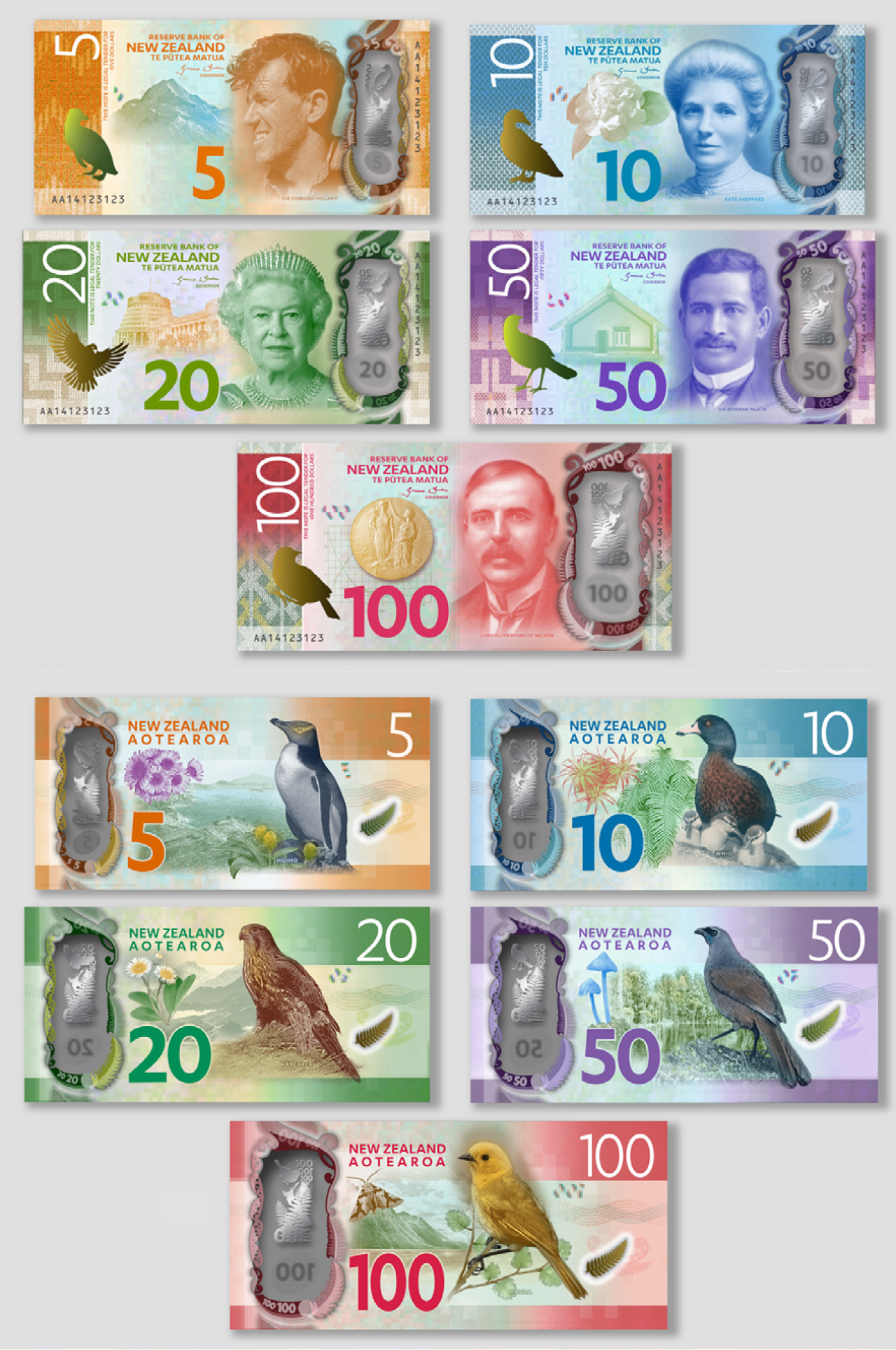 New Zealand Banknotes Series 7 The Kiwis Catch All