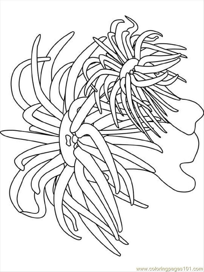 Ocean Coloring Pages | Coloring Pages Sea Anemone (Natural World ...