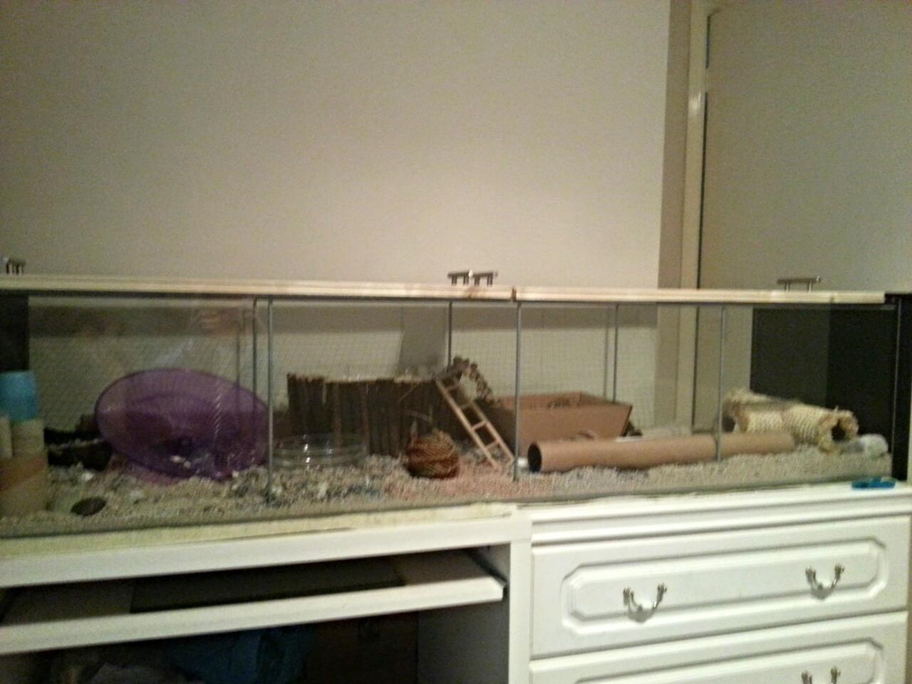 finest hamster diy ikea detolf cage lid with vitrine detolf. Black Bedroom Furniture Sets. Home Design Ideas