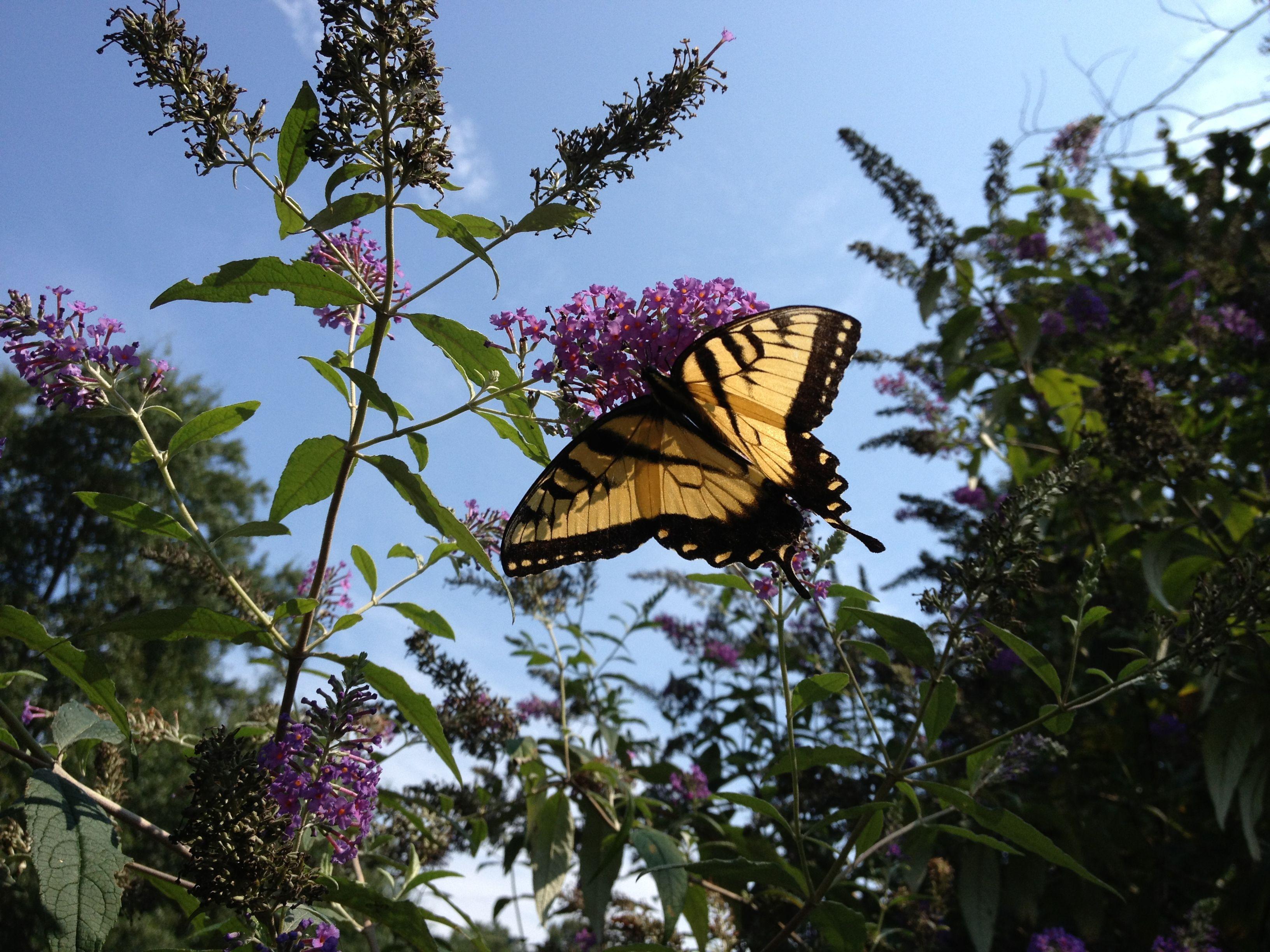 Love butterflies....so cheerful!