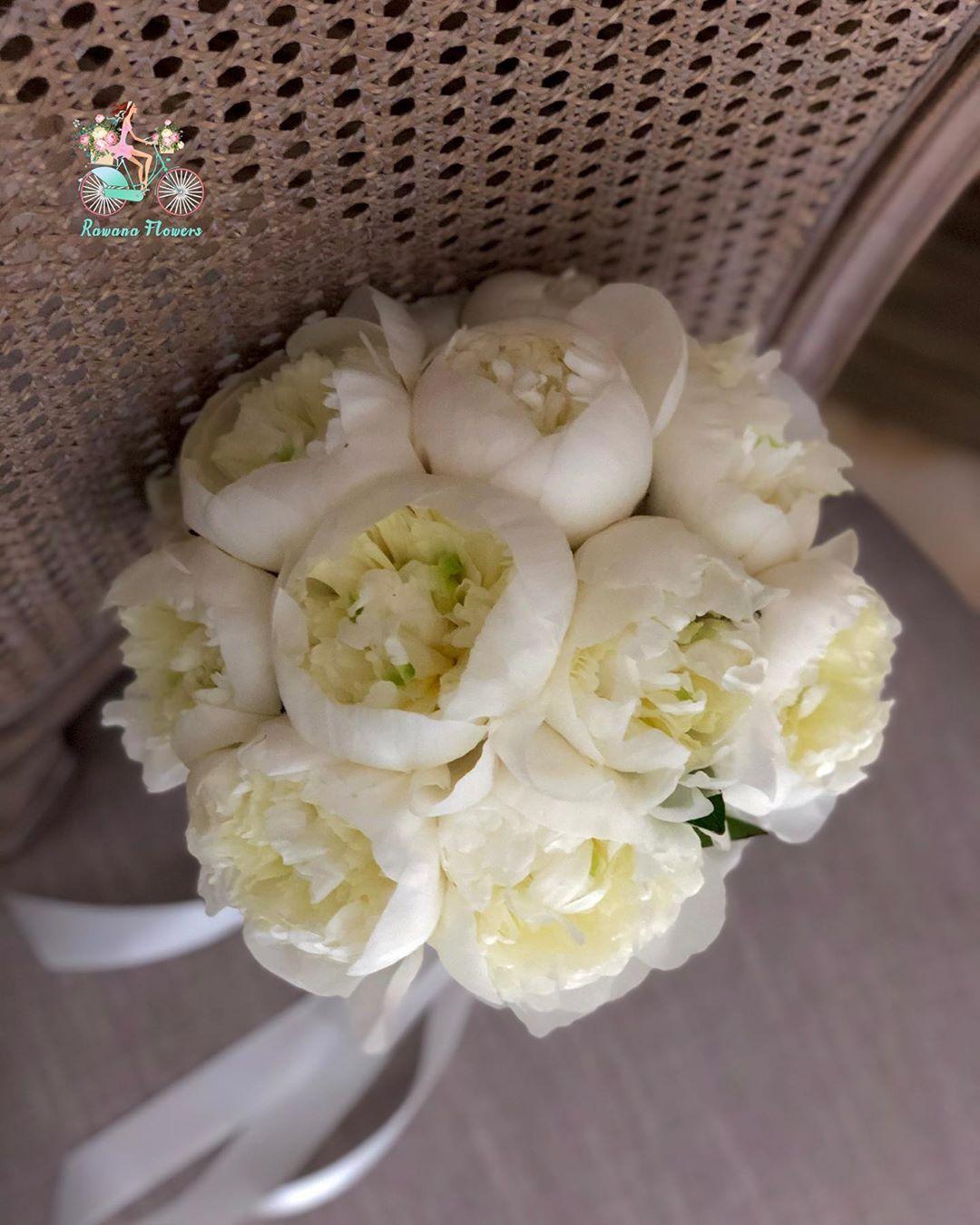 أجمل صور ورد أبيض Photo Hd Cicek Bahar