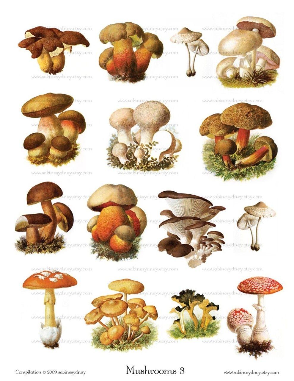 Log In Stuffed Mushrooms Mushroom Art Vintage Mushroom Illustration