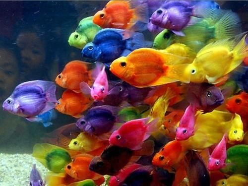 Colorful Fish Don T Know If It S Real But It Looks Like A Crayon Box Of Fish Colorful Fish Beautiful Fish Animals Beautiful