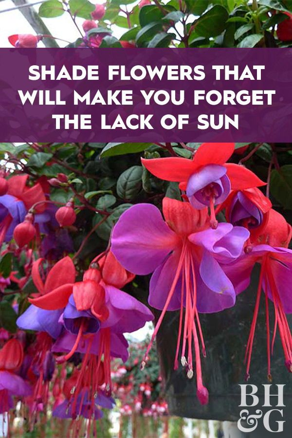 Photo of Shade Flowers that Will Make You Forget the Lack of Sun