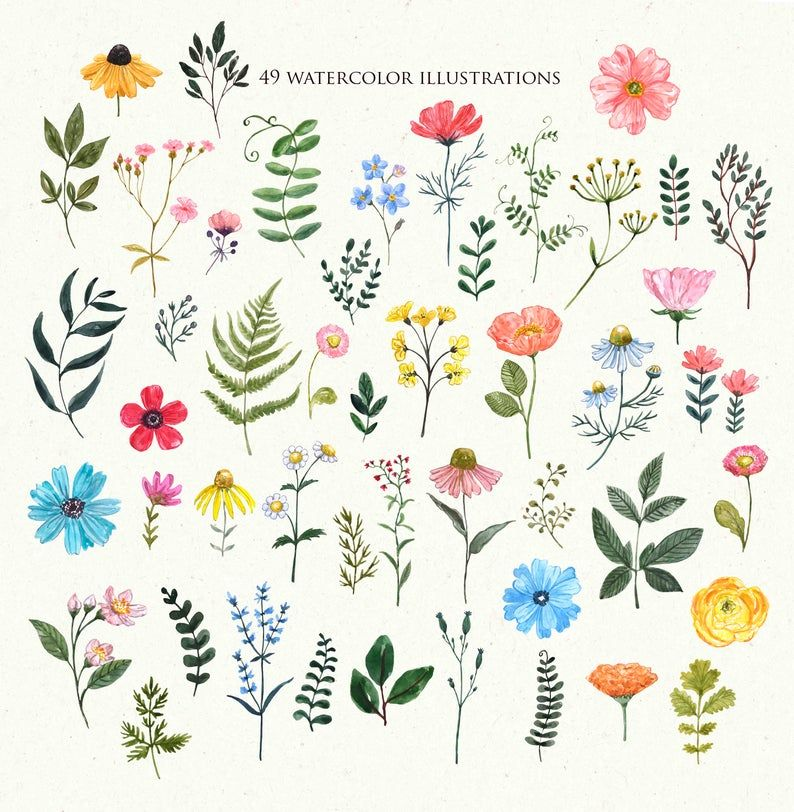 Wildflowers Clipart Watercolor Wild Flower Floral Illustration Etsy In 2021 Floral Illustrations Wildflower Drawing Flower Border