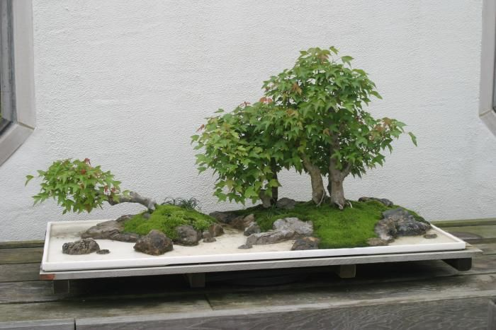 Penjing in the US National Bonsai and Penjing Museum.  Tree Penjing (shumu penjing): A tree penjing focuses on the depiction of one or more trees and optionally other plants in a container, with the composition's dominant elements shaped by the creator through trimming, pruning, and wiring.
