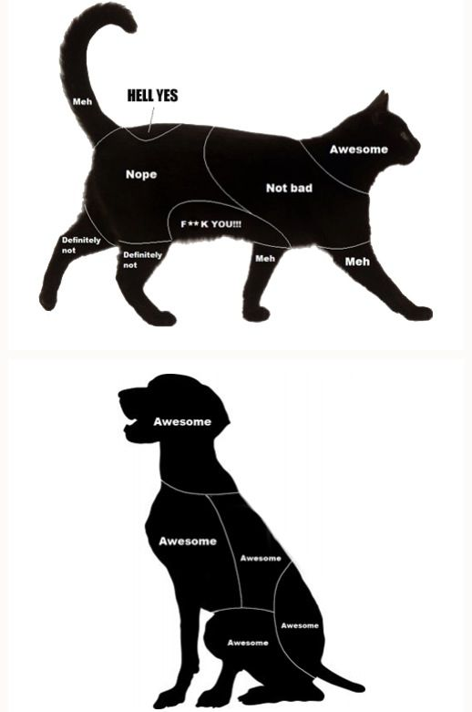 cats vs dogs petting diagram different things! pinterest cats Dog Dorsal Diagram cats vs dogs petting diagram this is so accurate i love it