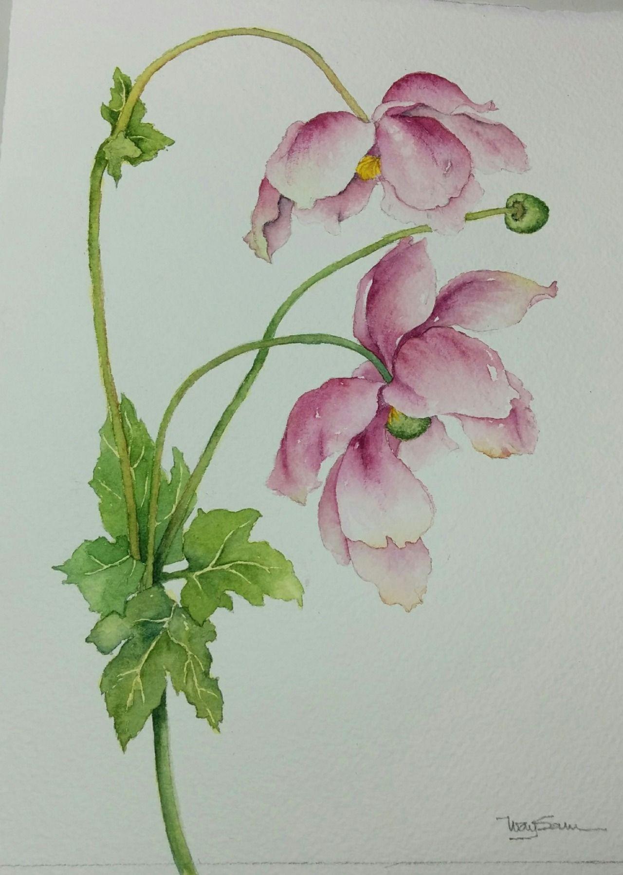 Japanese Anemones Or Wind Flower Watercolor Flowers Pattern