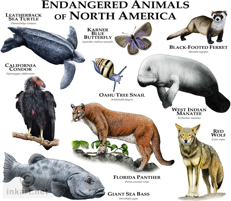 Endangered Species of North America North american