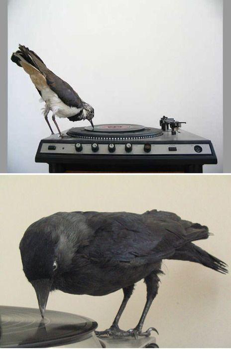 Record Player Vinyl Art Vintage Record Player Black Bird