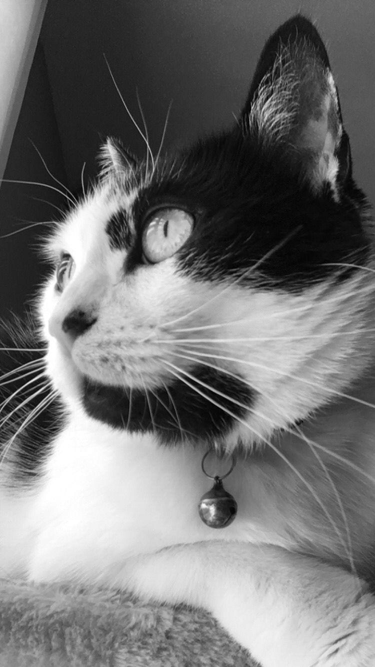 My baby cat ❤️ #cat