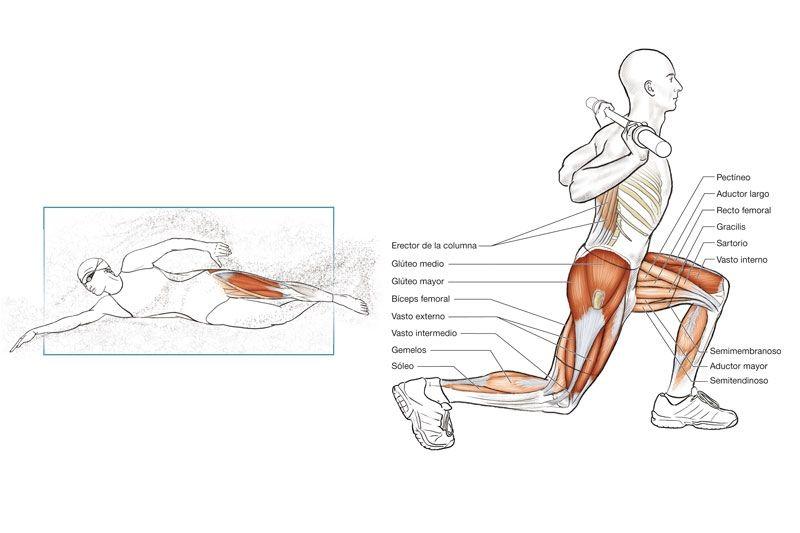Anatomía del nadador | Swimming - Natacion | Pinterest | Nadadores ...