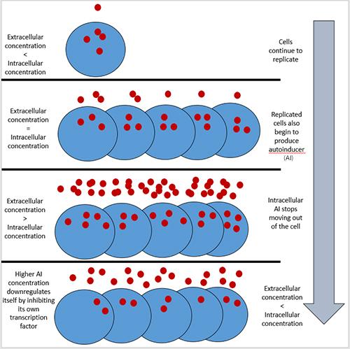 How Quorum Sensing Works In 2020 Gene Expression Quorum Bacteria