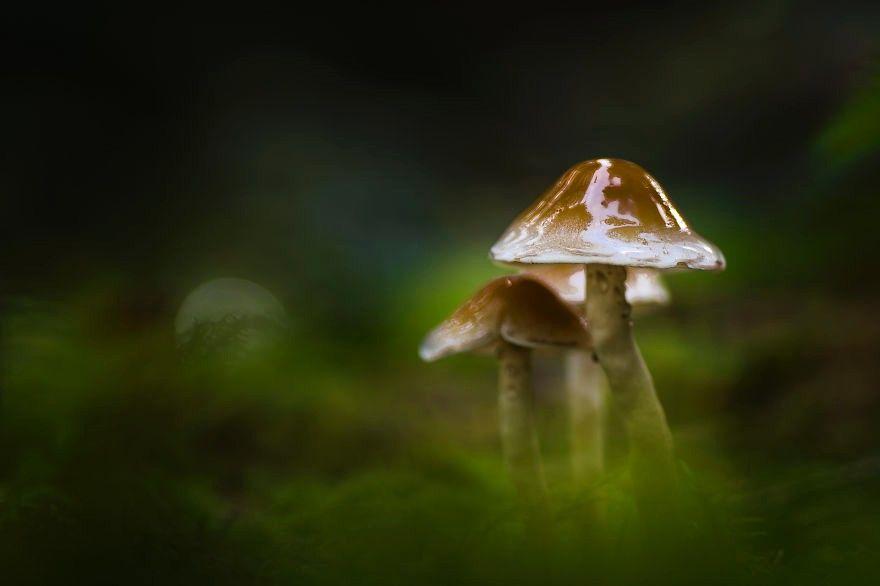 Sumérgete en los paisajes miniatura que estos organismos nos brindan