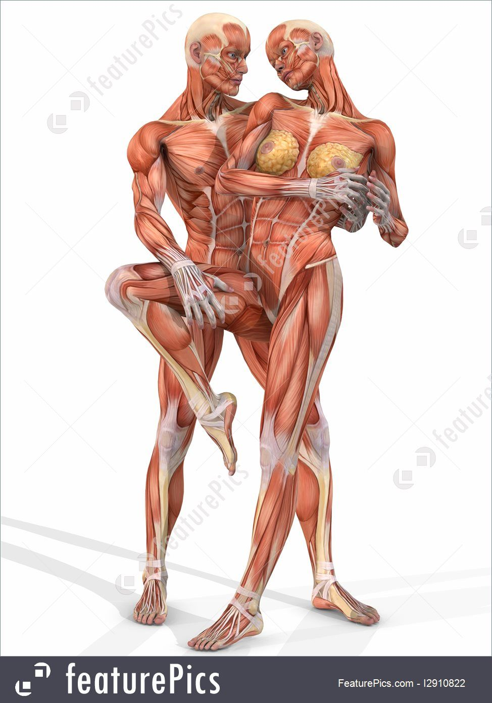 Image result for female anatomy arm up | DIBUJOS A LAPIZ FIGURA ...