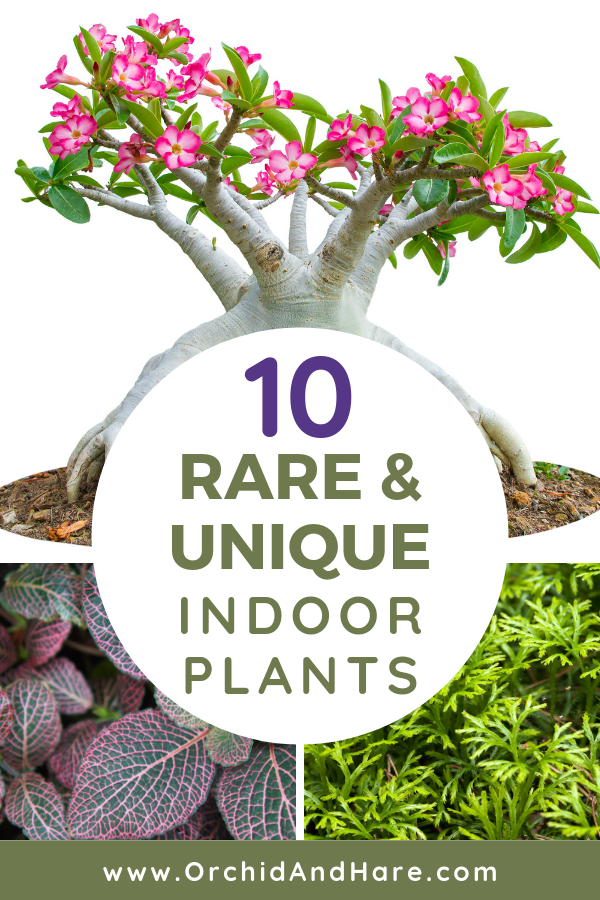 10 Rare Unique Houseplants You Will Love Includes Care Instructions Indoor Plants House Plants Indoor Low Light Plants