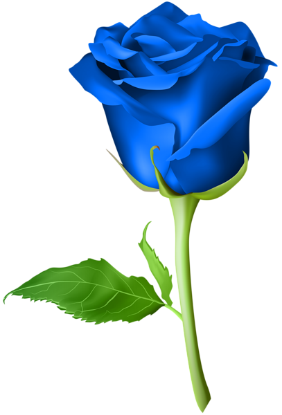 Rose Blue Transparent Png Clip Art Image Flower Drawing Rose Flower Png Rose Drawing