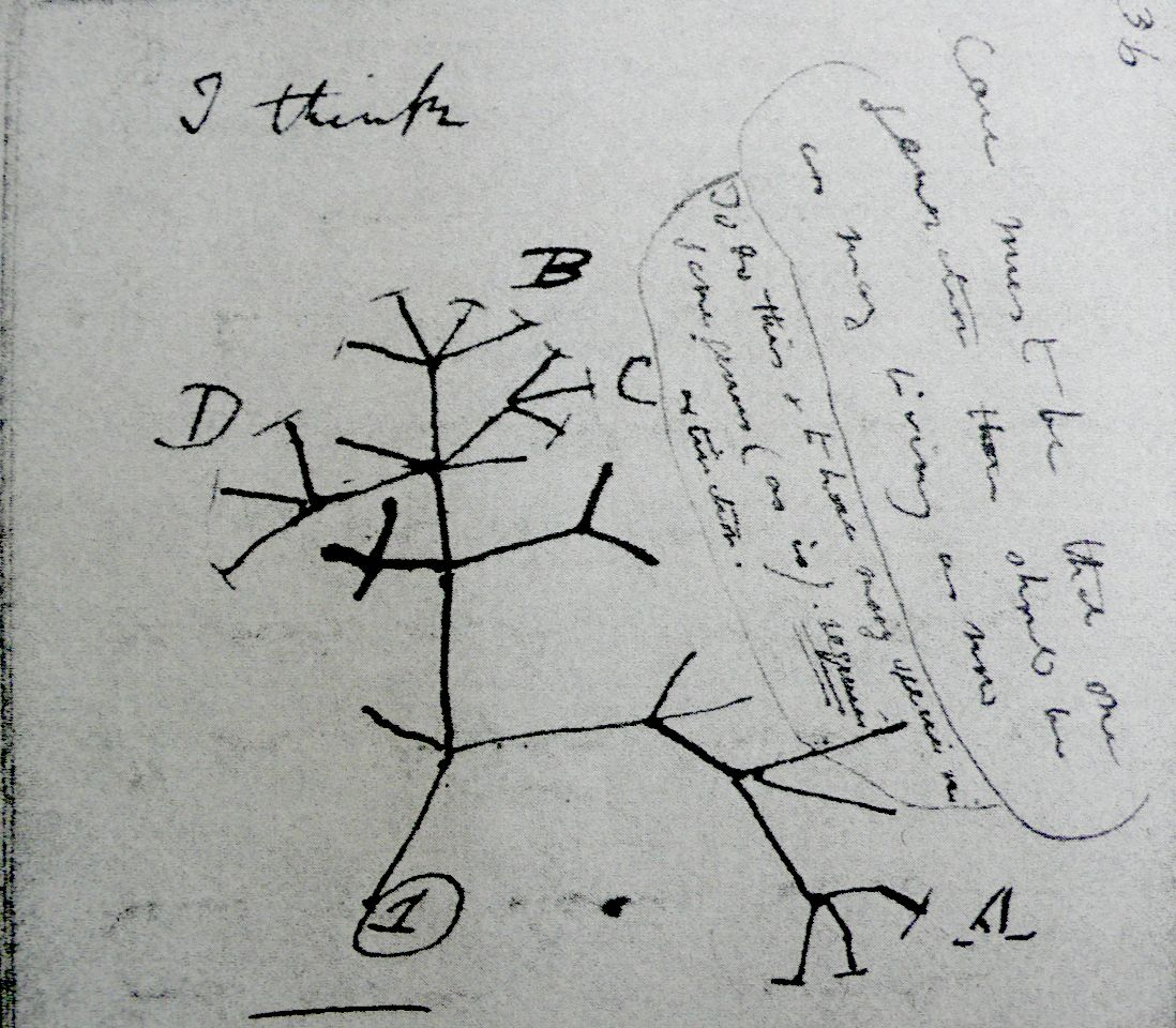 Charles Darwin S First Notes On His Theory About A Common