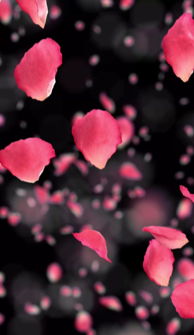 Flowers On Twitter In 2021 Flowers Photography Wallpaper Wallpaper Nature Flowers Flower Iphone Wallpaper