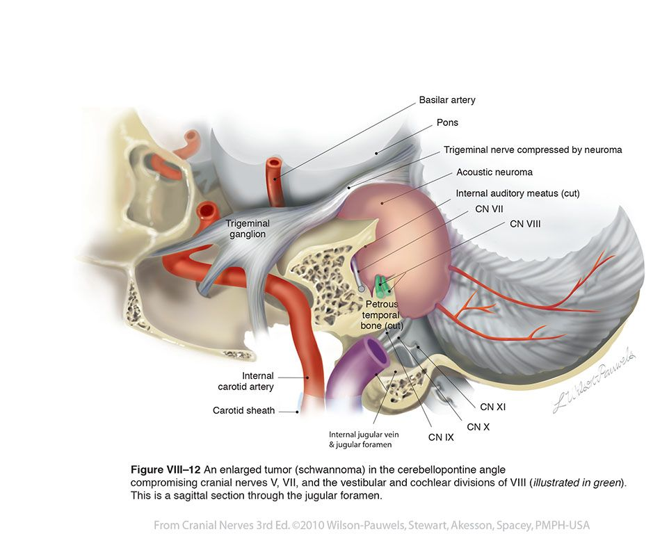Vestibulo-viii12_labelled768.jpg (939×768) | Anatomy of ears ...