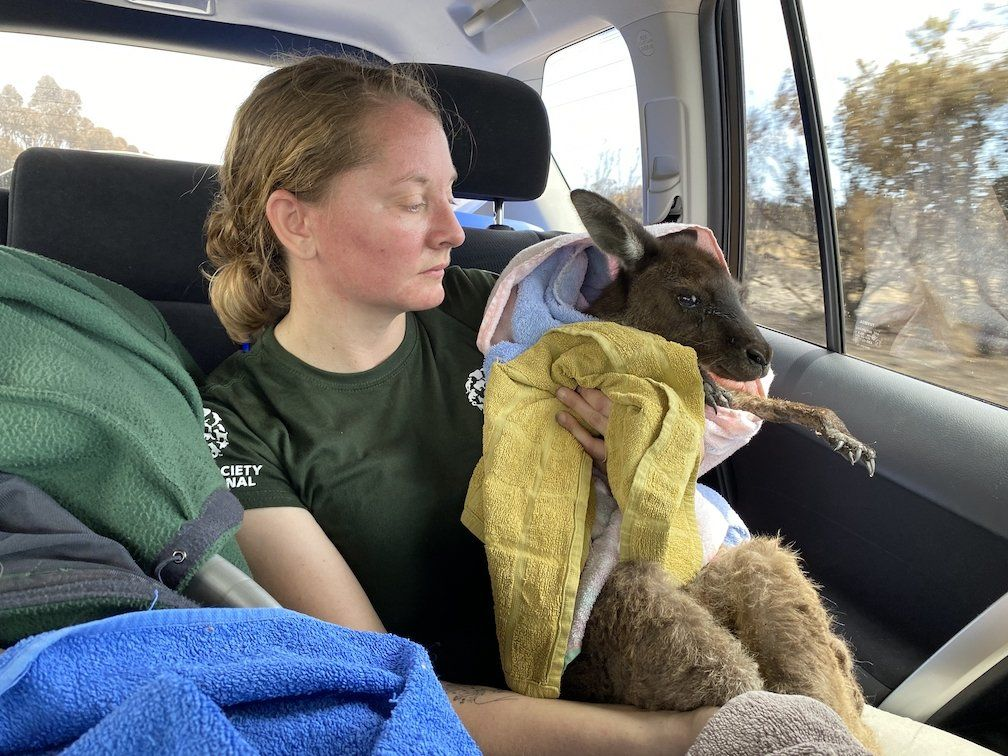 Disaster specialist about rescued animals in Australia A