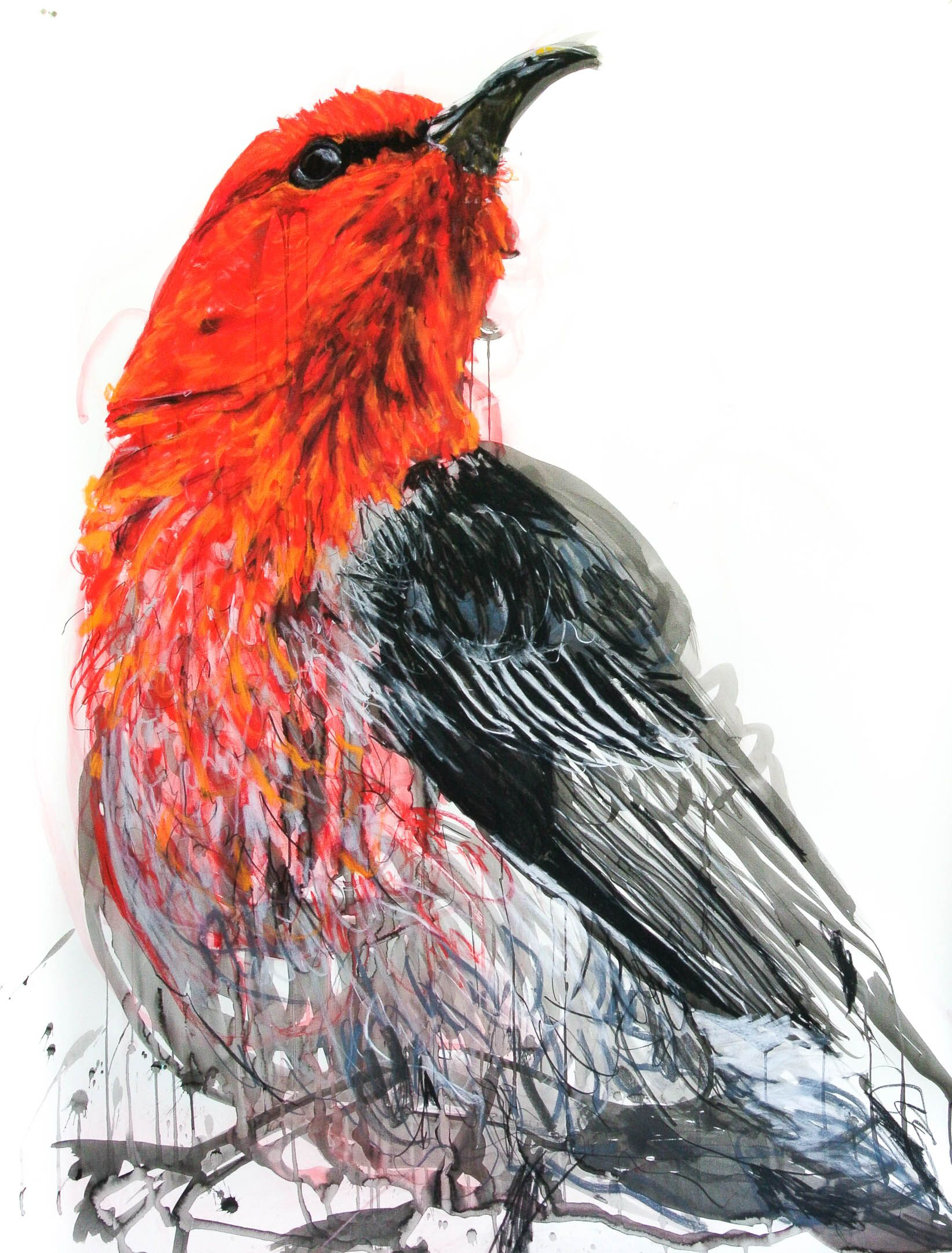 Meaghan Potter, Scarlet Honey Eater, 2017, Watercolour, Ink and Conte Charcoal on Arches 300gsm Watercolour paper, 140 x 150 cm, .M Contemporary, Art Gallery, 37 Ocean St, Woollahra, NSW, enquire at gallery@mcontemp.com