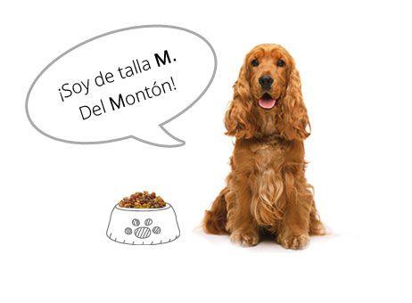 ¡Pero que vas a ser del montón! Los #perros medianos son los excelentes compañeros :D