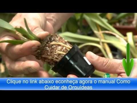 Como Fazer Adubação Orgânica em Orquídeas - YouTube