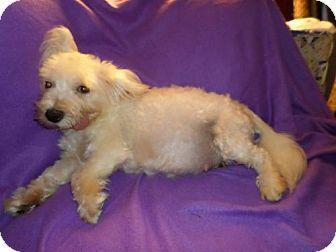 Chattanooga Tn Maltese Meet Jane Seymour Tn A Dog For