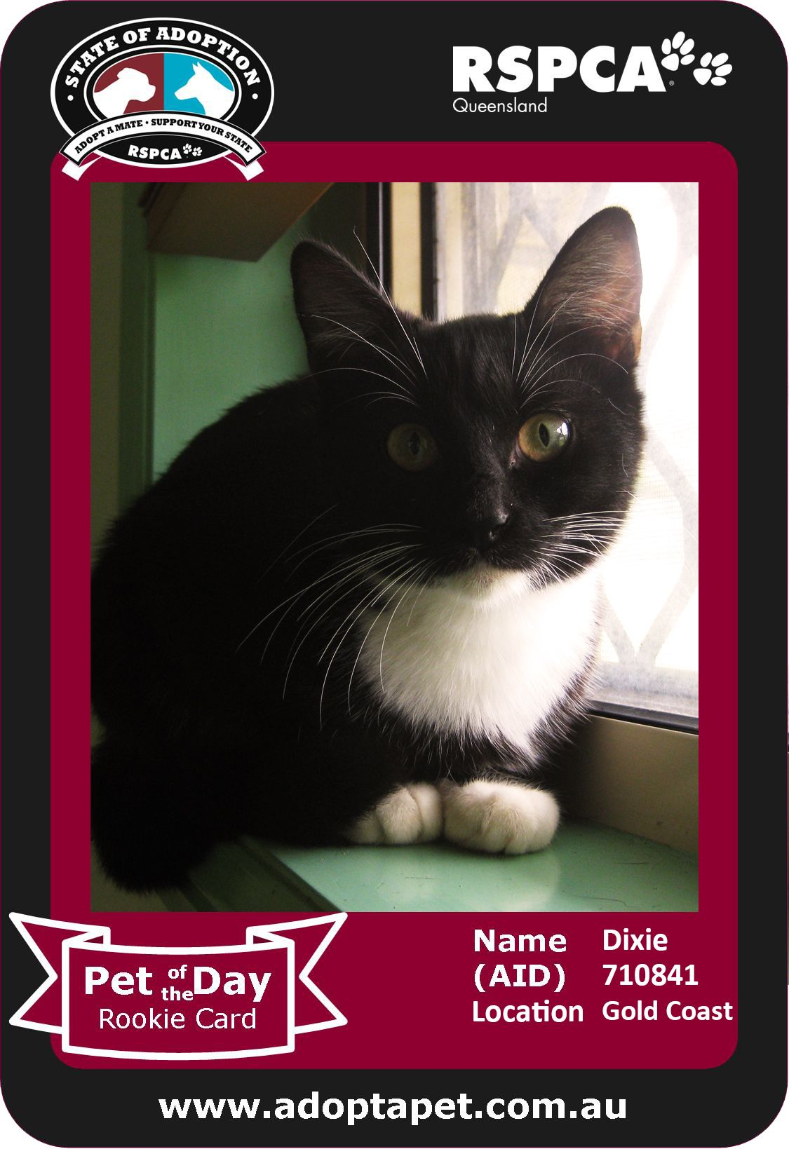 Hi I M Dixie I M A Young Kitten Cute As A Button Looking For My