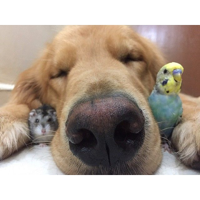 Bob falls asleep while some of the others cuddle with him.