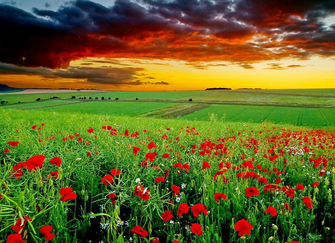 Plain Of Iranian Poppies A Natural Masterpiece Located In Iranian Province Of Semnan Province Das Scenery Wallpaper Hd Nature Wallpapers Landscape Wallpaper