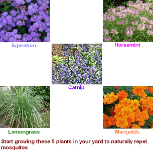 Grow Your Own Mosquito Repellent (www.crippencars.com) #crippencars#mosquito# remedies