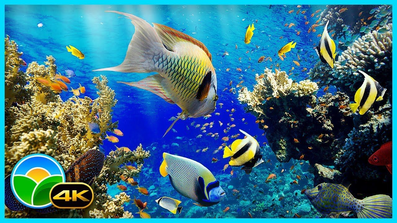 The Best 4K Aquarium for Relaxation II 🐠 Relaxing