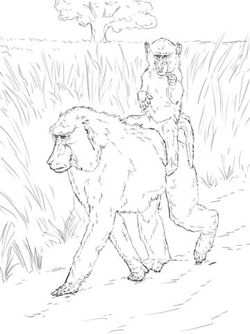 Mamá Babuina lleva a su bebé a la espalda Dibujo para colorear ...