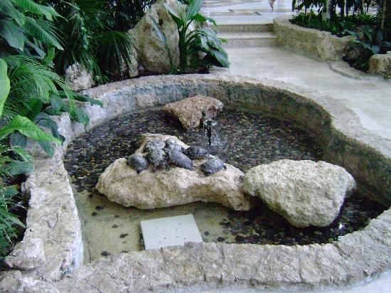 Turtle pond small garden ponds pinterest turtle pond for Small garden pond care