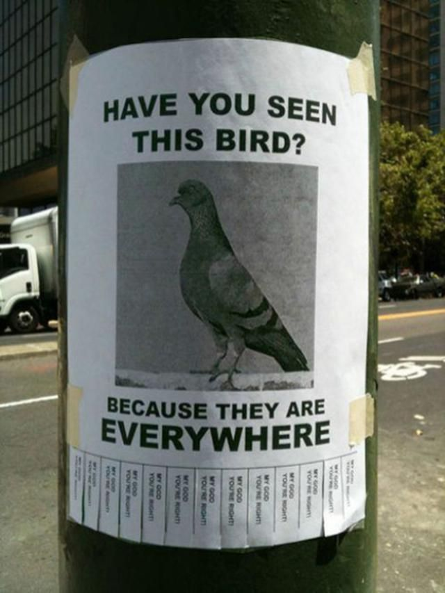 20 Funny Lost And Found Pet Posters Funny Signs Hilarious I