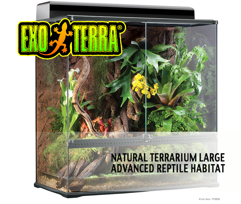 The Exo Terra Large Extra Tall Terrarium Review At Reptilelife Com