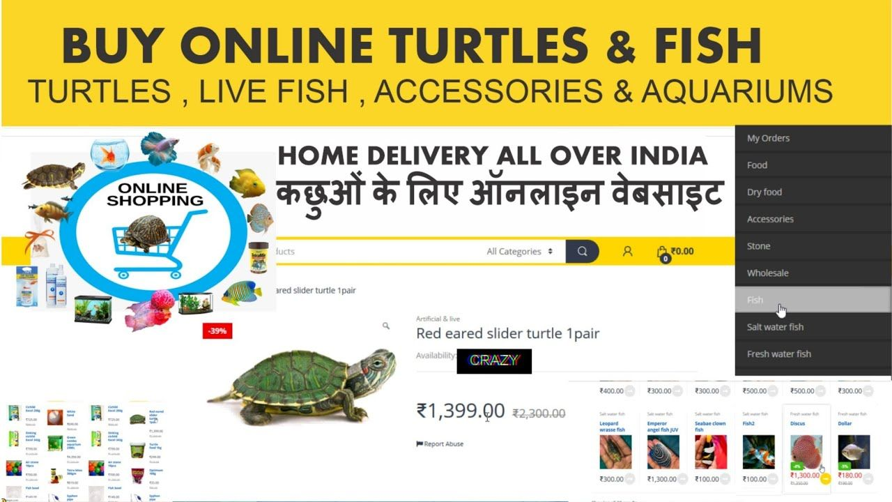 How To Buy Turtles Online Website Buy Live Fish Fish Food Turtles In 2020 Live Fish Online Food Shopping Turtle Homes