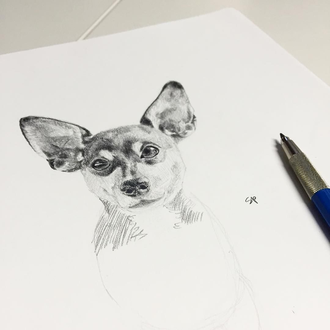 Drawing a min pin, I almost always focus too much on the head and get lazy when it comes to the body. (follow on Instagram: @stacysketches)