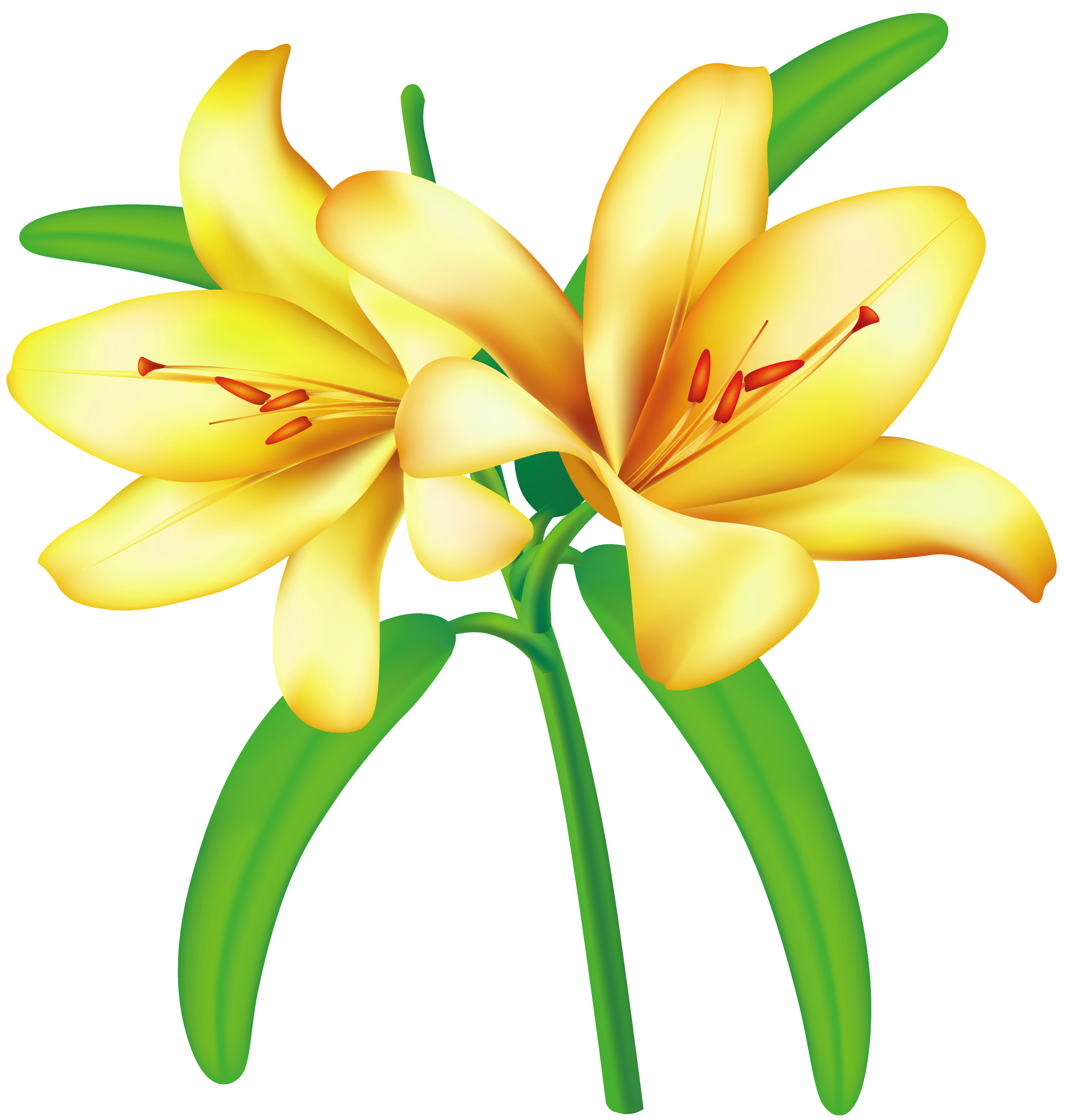 Yellow rose / Flower / Transparent