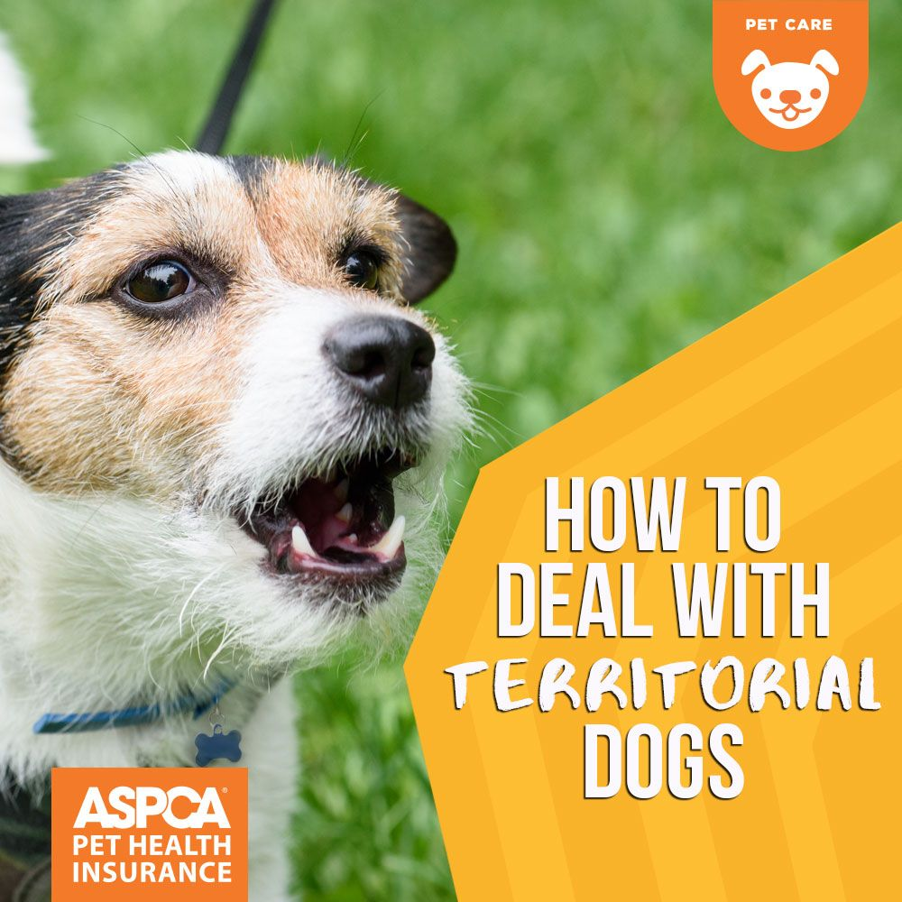 How To Deal With Territorial Dogs Aggressive Dog Dogs Dog