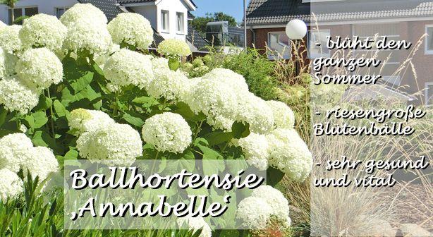 Pflanzenversand ✿ Gartenpflanzen online kaufen Garten-Schlüter - gartenpflanzen