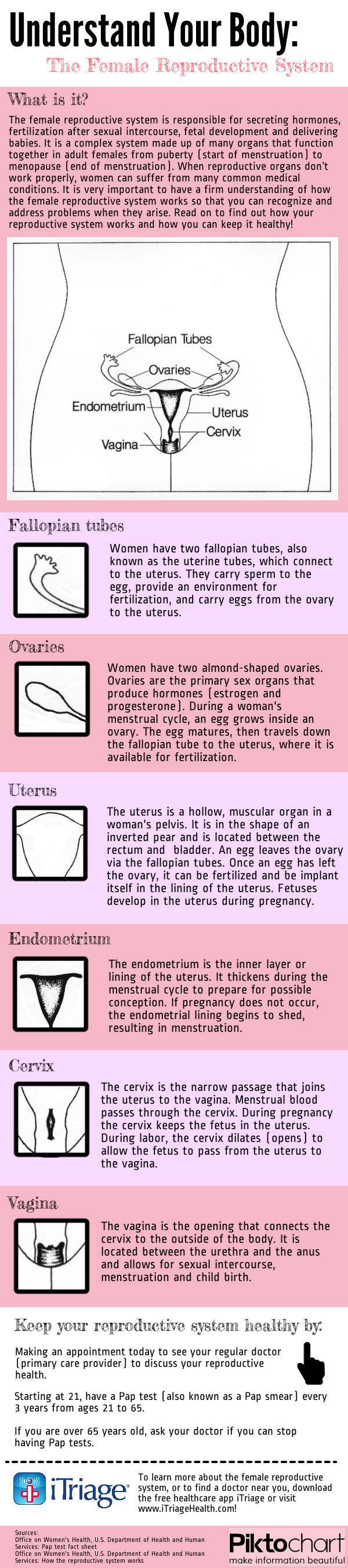 Understand your body female reproductive system nursing in honor of cervical health awareness month itriage created this infographic about the female repro ccuart Gallery