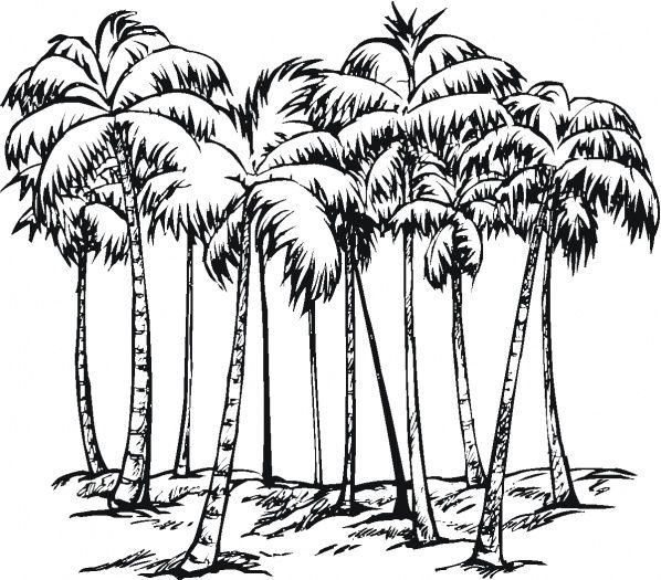 Pix For Coconut Palm Drawing Hawaiian Illustrative Art Of