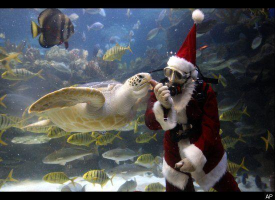 "Christmas in Malaysia, ""Scuba Santa"" at KLCC Aquaria https://sites.google.com/site/malaysiaauswandern/christmasinmalaysia"