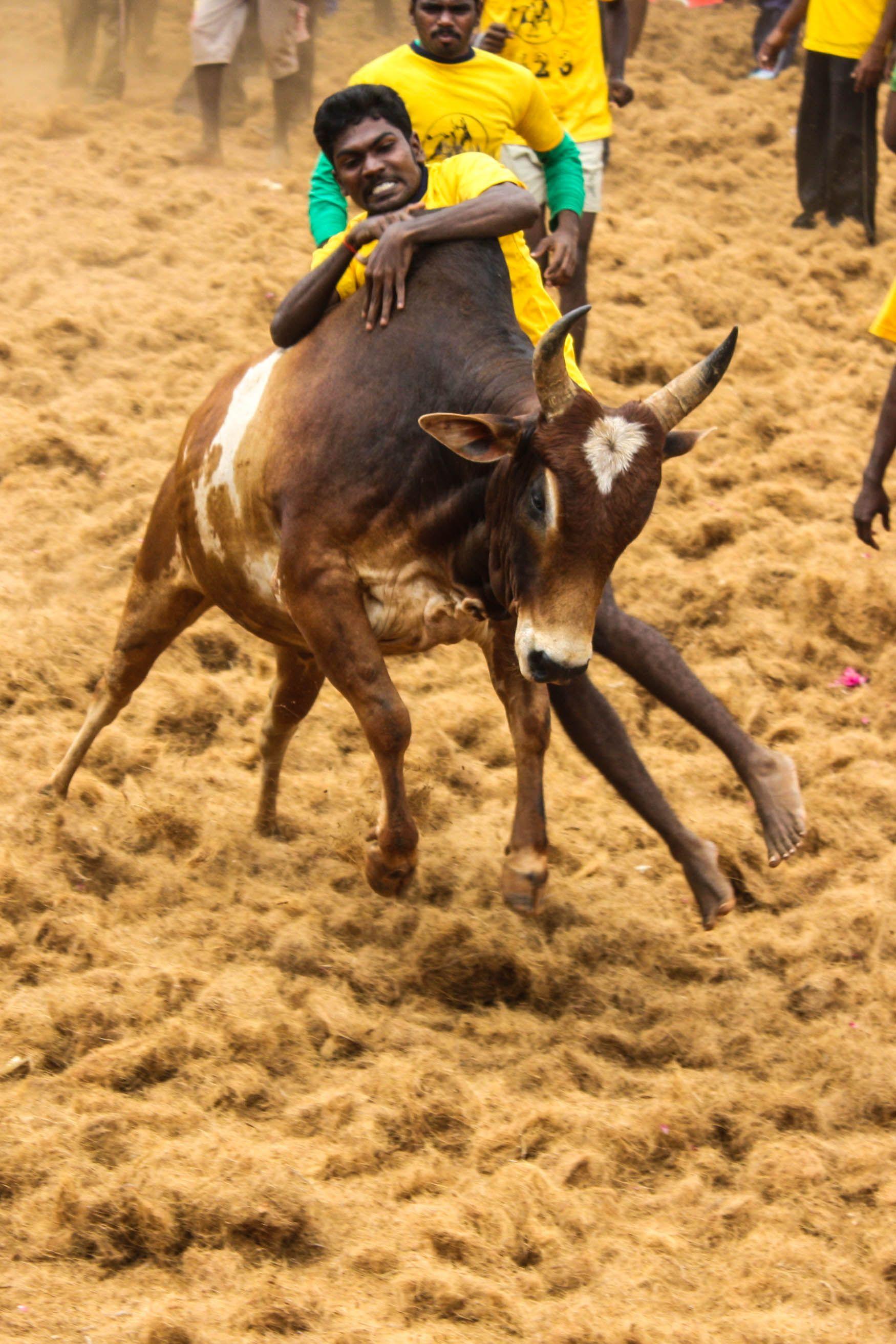 Pin by saranya nagarajan on our bravery tamilnadu pinterest india incredible india and culture