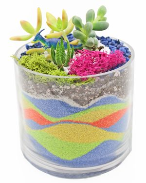 Surprising Sand Art Succulent Terrarium In Glass Cylinder California Download Free Architecture Designs Licukmadebymaigaardcom