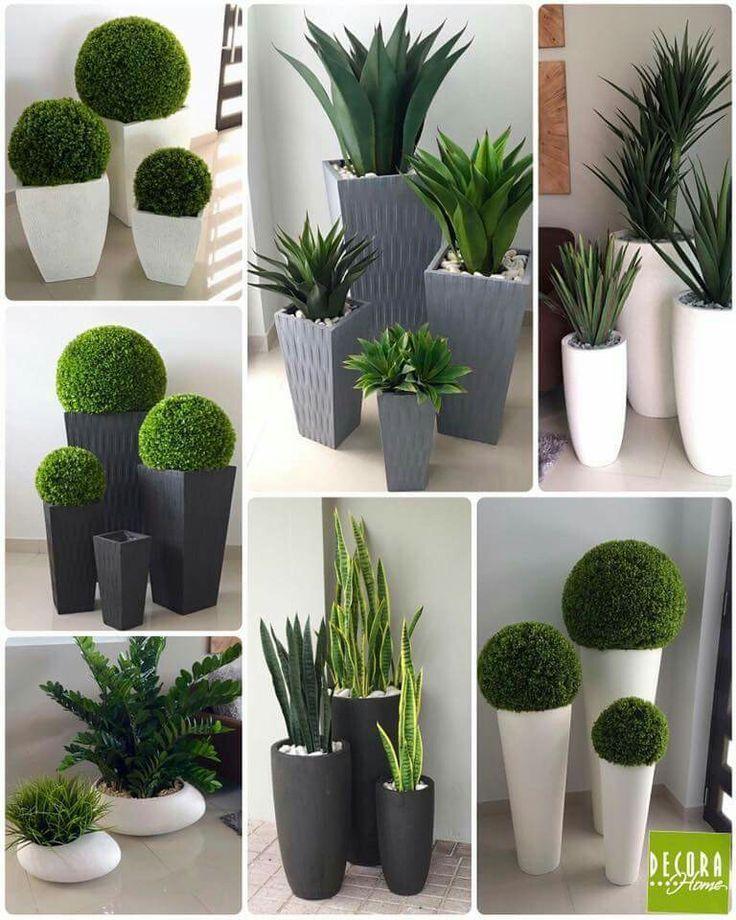 Pflanzen #plantersflowers Pflanzen,  #Pflanzen