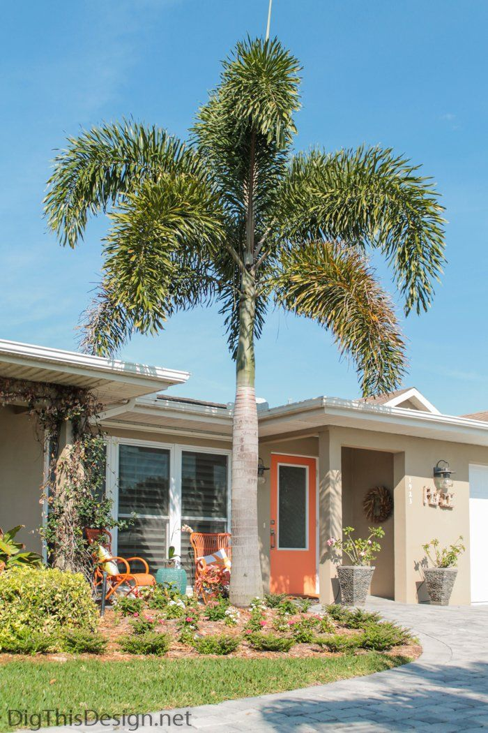 Front porch design project with new landscaping and foxtail palm tree as focal point.
